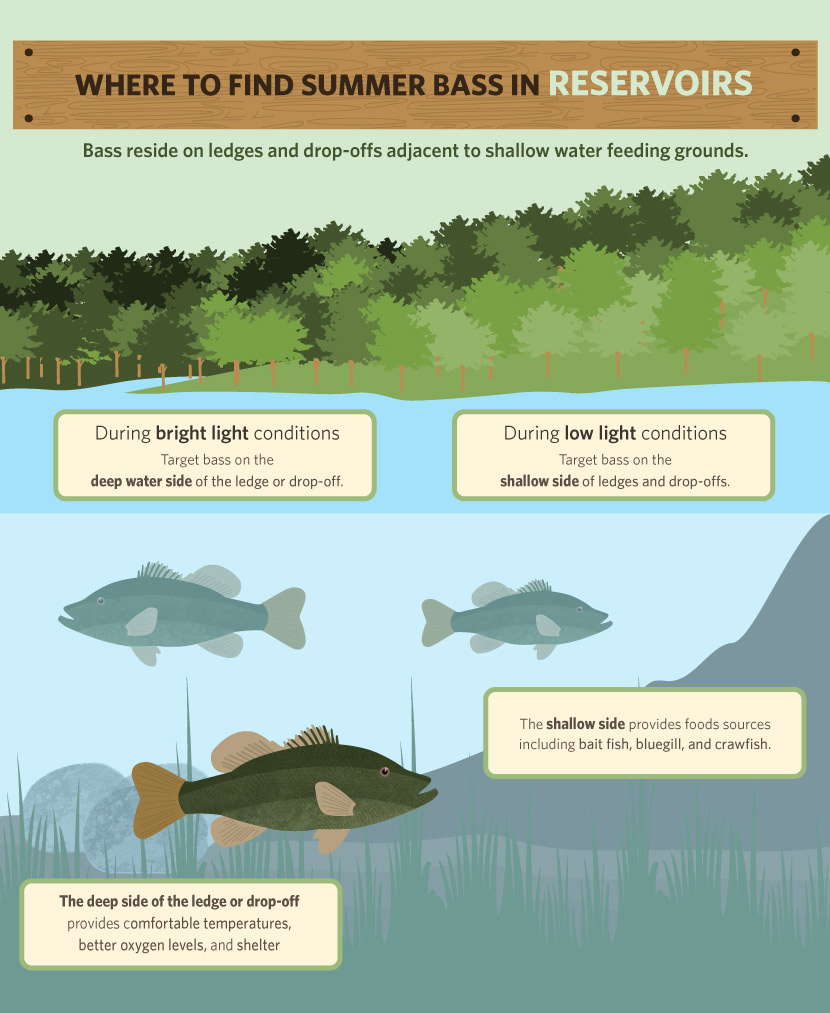 bass fishing infographic