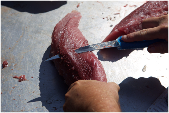 Here is where having help is good. After removing the loins you need to trim whatever blood line is left on the loin. This is very important because it will have a very negative effect on the taste of the tuna if it is left on.