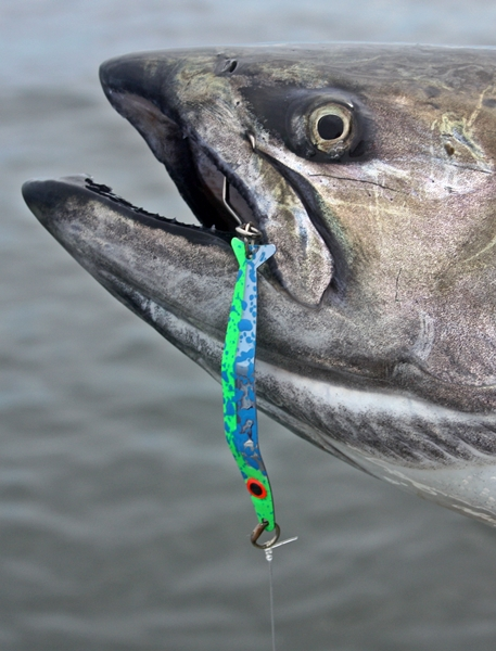 A 2/0 Matzuo sickle hook is the perfect addition to the business end of a Coho Killer, and any number of other effective Northwest salmon lures. (Terry Rudnick Photo)