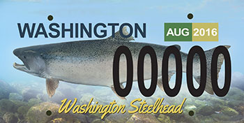 "The proposed license plate features an image of a steelhead with ""Washington Steelhead"" emblazoned on it in an interesting script."