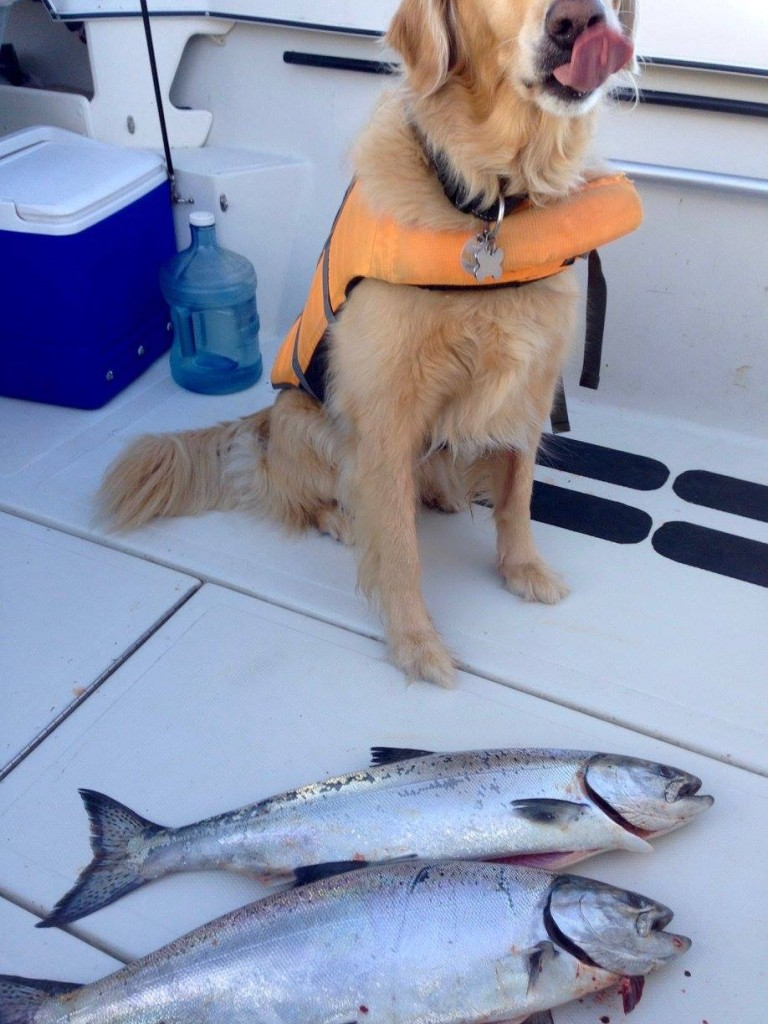 Rory O'Connor and pooch limited on tasty Blackmouth this weekend. I lick my chops just like that when I think about BBQ'd Winter Chinook. I like the PFD on the dog. A life jacket is also man's best friend on the water.