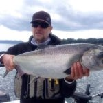 Larger fish are showing up in the San Juans.