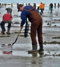razor-clam-diggers-washington-state-photo-by-vera-trainer-noaa
