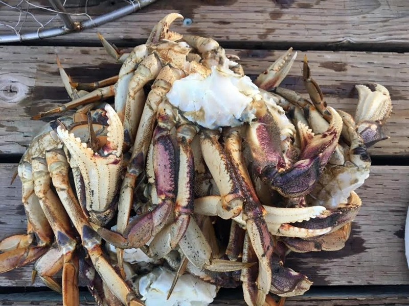 Don't haul the boat out just yet. Crabbing is pretty good in the Islands right now.